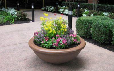 Container Gardening – Intro