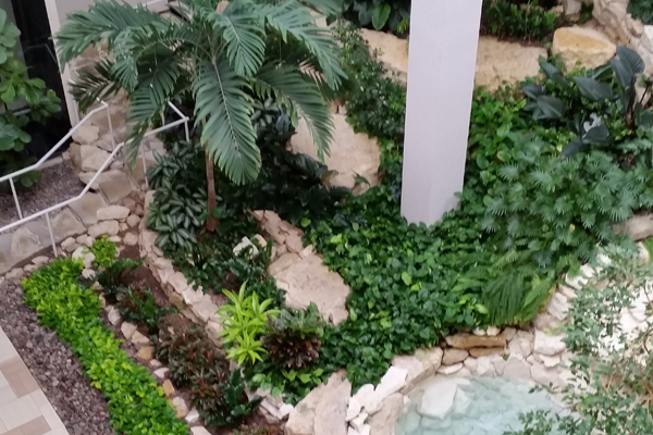 lobby plants interiorscaping austin texas