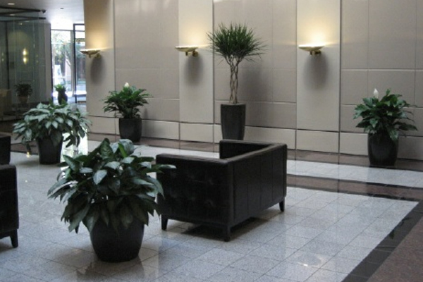 lobby plants office plantscaping
