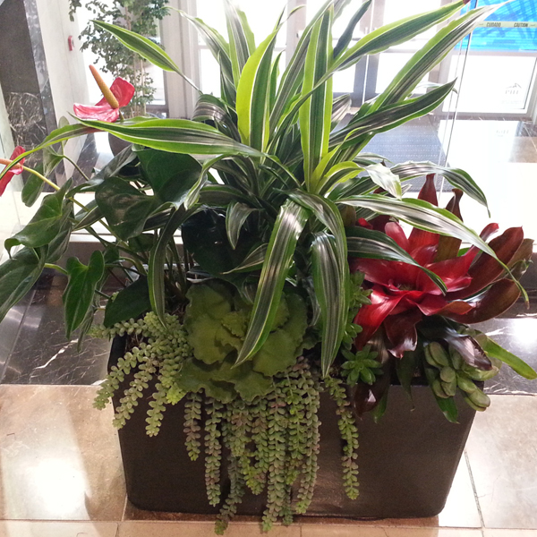 plant interiorscaping